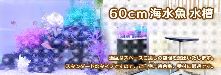 60cm海水魚水槽のレンタルなら福岡アクアガーデンへ