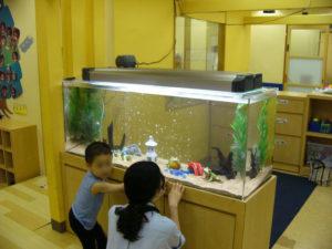 幼稚園様 遊び心いっぱい!大人気水槽
