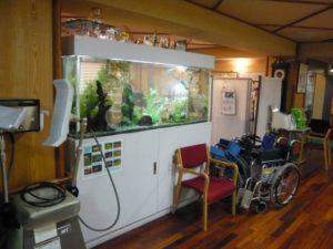 介護施設様 華やかなエンゼルフィッシュ水槽