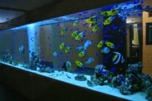 飲食店様 8メートルの大型海水魚水槽を設置