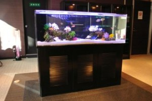 企業様 待合室に見応えたっぷりのサンゴ水槽
