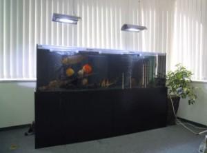 企業様 高級感あふれる室内にピッタリのアロワナ水槽