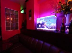 飲食店様 淡い光の美しい水槽