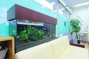薬局様 色とりどりの熱帯魚が泳いでいます