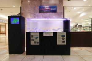 短期イベント 大型展示水槽を設置