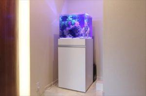 幻想的なキューブ水槽を設置しました