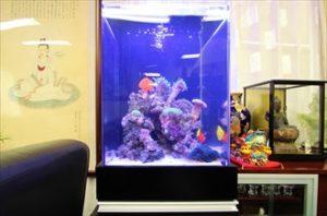 企業様 淡水魚水槽をサンゴ水槽に変身させました