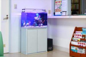 病院様 受付にかわいいニモ水槽が登場!
