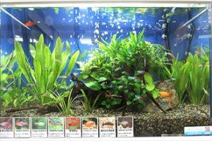 保育園様 園児に大人気の水槽です!