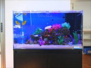 ブロックを南洋の魚たちが泳ぎます!