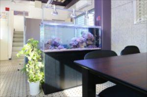 豪華なサンゴ水槽!