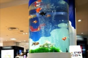 金魚たちの大型円柱水槽!