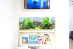 クリニックに本棚付きの埋め込み淡水魚水槽