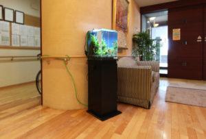 特別養護老人ホームに30cm淡水魚水槽を設置