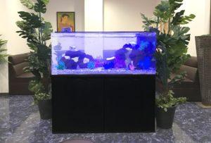 クラブラウンジに120cm淡水魚水槽