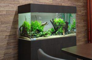 オフィスに水草茂る淡水魚水槽